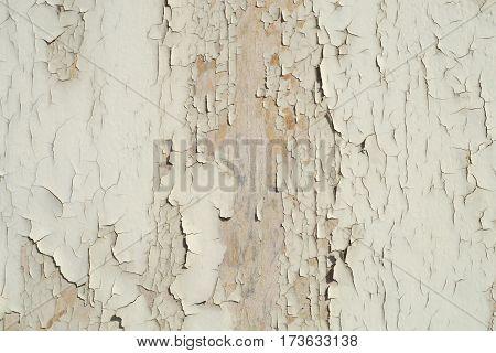 old white peeling paint on wood surface texture