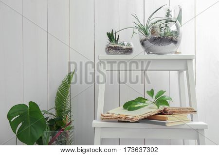 Florarium with succulents and cactus on step ladder against wooden background