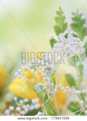 Beautiful abstract light and blurred soft background with flowers in yellow and green colors. Dew drops or rain water on the flower of yellow freesia. Macro image with mirror reflections.