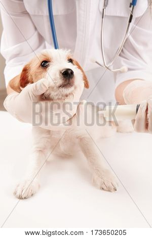 Veterinarian giving medicine to cute funny dog in clinic