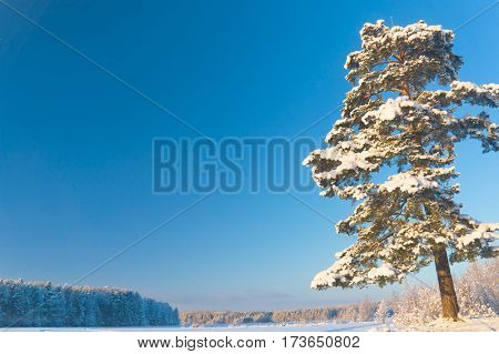 Frosty Winter Cold Landscape