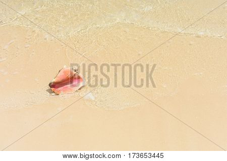 conch shell in the surf on Caribbean beach