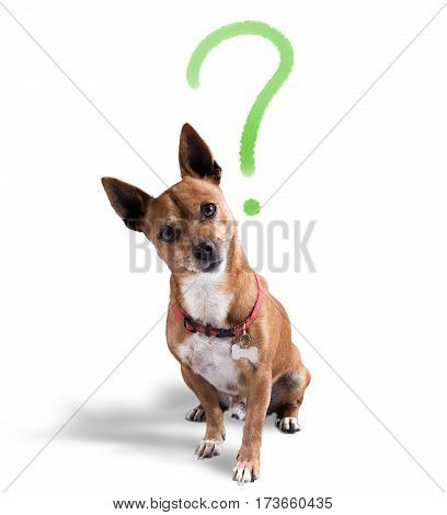 Dog with question mark over his head. Dog with quizzical expression