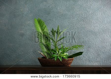 Plant arrangement on a color background
