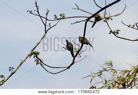 Cute wild birds grooming on a tree brach