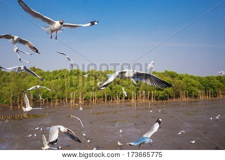 Seagull Flying With Sea And Sky At Bangpu, Thailand