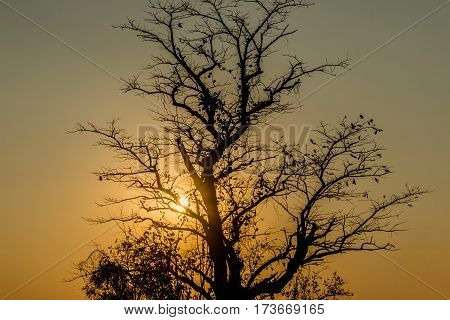 silhouette of tropical sunset with trees Thailand
