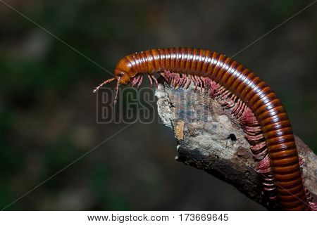 the millipede walking Out on a Limb