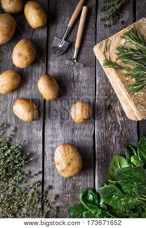 Potato And Green Potherbs On Rustic Background