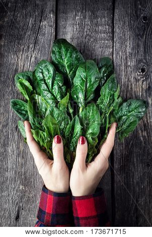 Woman Holding Fresh Spinach On Rustic Table