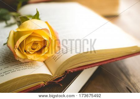 Morning relaxation and cozy with yellow rose on the book with copy space for education nostalgic concept