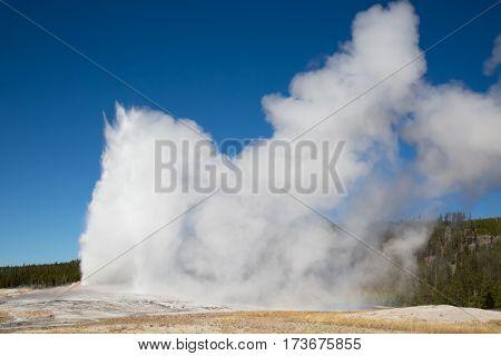Old Faithful geyser eruption in the Yellowstone national park, USA