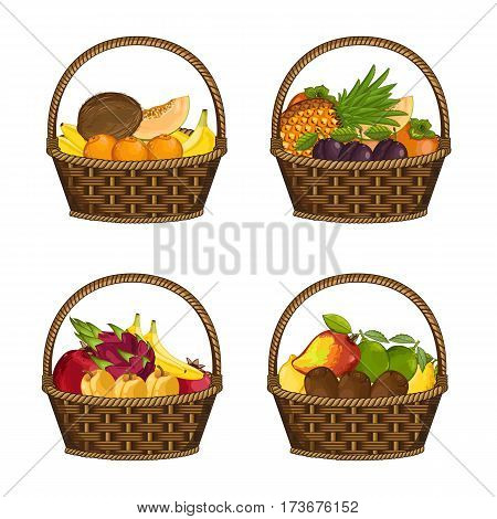 Fresh organic fruit in wicker basket set isolated vector illustration. Eco farming, vegetarian nutrition, organic healthy diet, vegan retail. Banana, lemon, avocado, coconut, plum, persimmon in basket