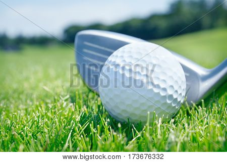 golf ball and club on the grass