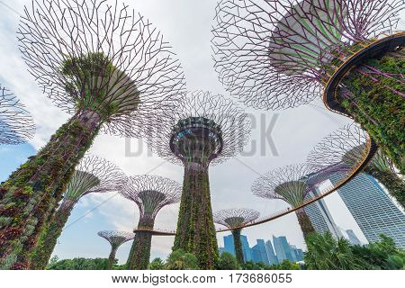 Singapore City, Singapore - Aug 8, 2016: Supertree Grove In The Graden By The Bay In Singapore