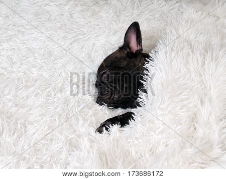 The dog is sleeping. The dog is black. Plaid whiteg is sleeping. The dog is black. Plaid white