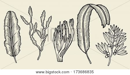 Set of seaweed Sketch. Hand drawn vector illustration isolated on beige