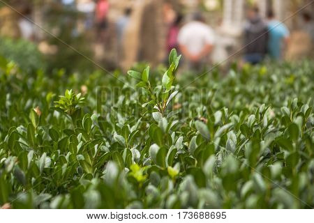 Green plants photographed close-up with soft focus. Carpet from grass, complete coverage of green leaves, eco pattern, blurred background