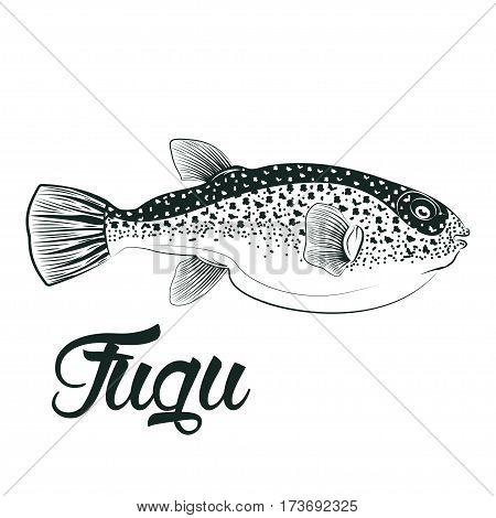Monochrome illustration of  fugu fish isolated on white background, vector