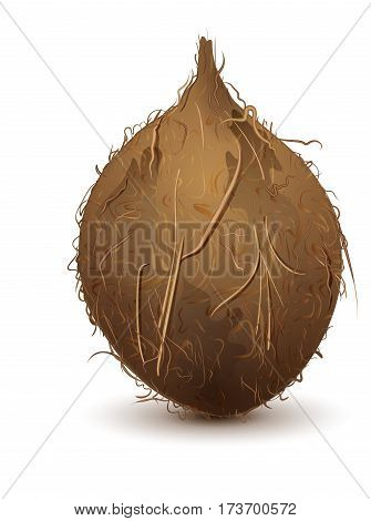 Brown shaggy coconut stands upright. Isolated on white vector illustration