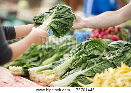 Swiss chard bunch raw and fresh on the market