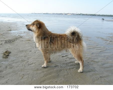 furry trained dog at the beach poster