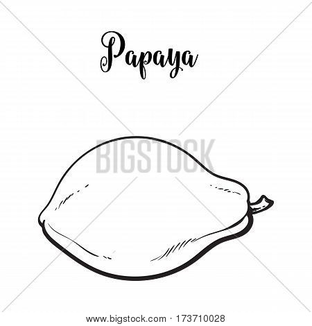 Whole unpeeled, uncut papaya tropical fruit in horizontal position, sketch style vector illustration isolated on white background. Realistic hand drawing of whole papaya fruit