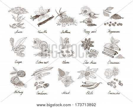 Hand drawn natural spices set with culinary organic herbs and plants isolated vector illustration