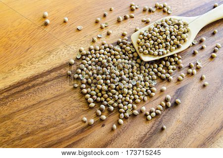 White pepper corn in wood spoon on a rustic wooden background. Organic pepper corn spices.