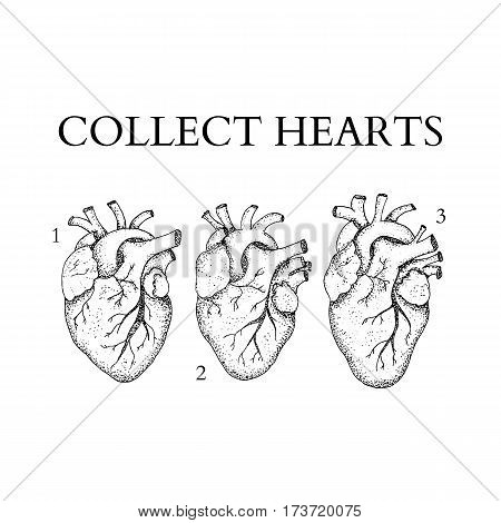 Dotwork Collect Human Hearts. Vector Illustration of Boho Style T-shirt Design. Tattoo Hand Drawn Sketch.