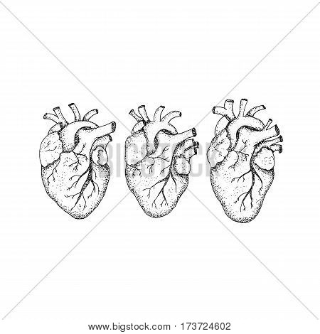 Dotwork Three Human Hearts. Vector Illustration of Hipster Style T-shirt Design. Tattoo Hand Drawn Sketch.
