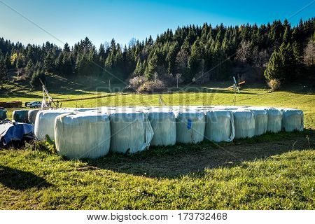 Stack Or Pile Of Hay Bale Rolls.