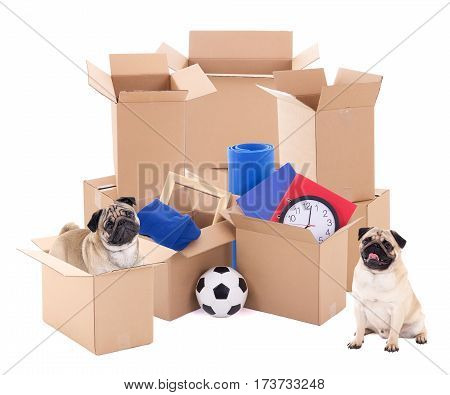 moving day concept - brown cardboard boxes and dogs isolated on white background