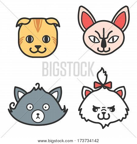 Set of cat icons. Cute persian, naked and scottish cat. Funny friendly purebreed pets. Happy colorful kitties