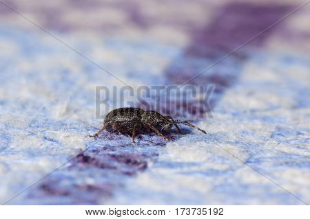 small black beetle crawling on the tablecloth lying on the table