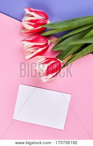 Spring flowers and card. How to apologize to woman.
