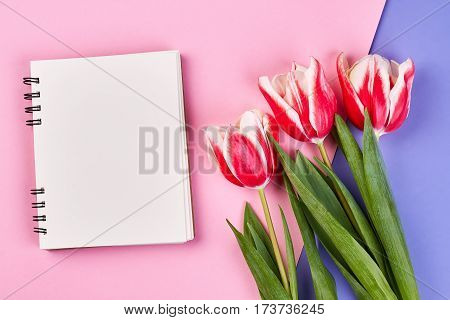 Empty notebook and red flowers. Letter for the beloved.