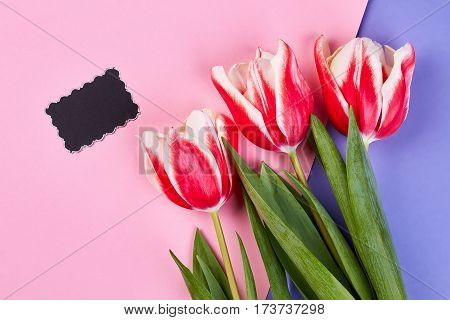 Words are superfluous. Empty card and coloured tulips.