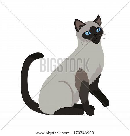 Siamese cat breed. Cute grey cat seating flat vector illustration isolated on white background. Purebred pet. Domestic friend and companion animal. For pet shop ad, animalistic hobby concept, breeding