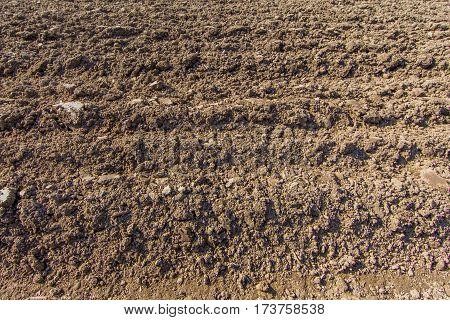 newly furrowed farmland in sunshine with furrows