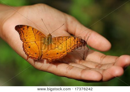 Butterfly on a child hand