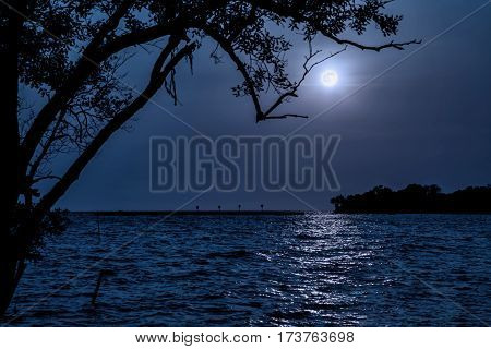 Night landscape. Beach by the sea with tree and full moon. the moonlit ocean at night with waves and water reflection.
