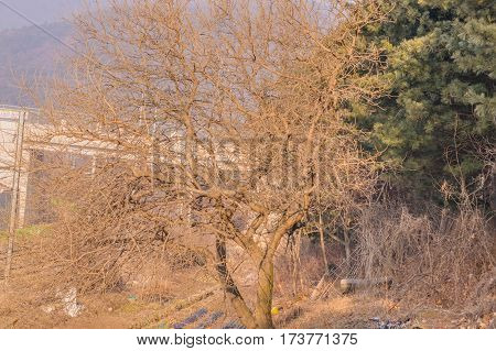 Large leafless tree in rural area next to some train tracks with debris on the ground