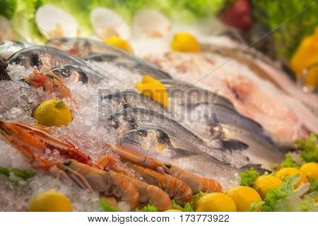 Close up of fresh mediterranean seafood on ice