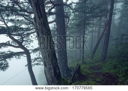 Scenic view of mysterious lush foggy forest