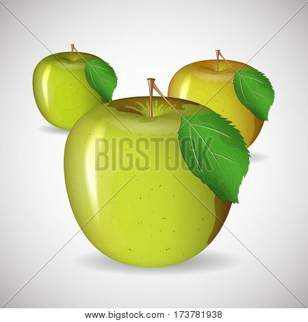 Juicy ripe apple green color in vector format