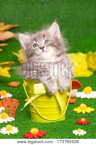 Cute gray kitten in bucket on artificial green grass