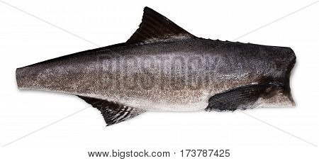 Cobia carcass without the head on a white background