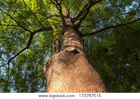 wood texture focus and green tree background