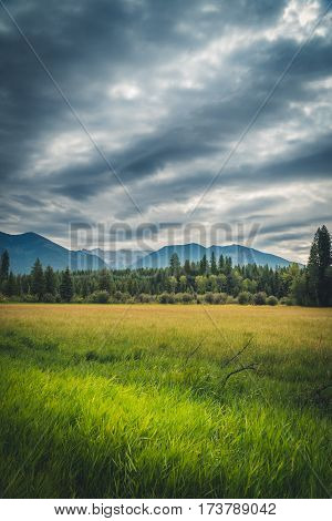 Image of a lush meadow on an overcast day.